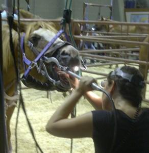 beste paardentandarts ter wereld